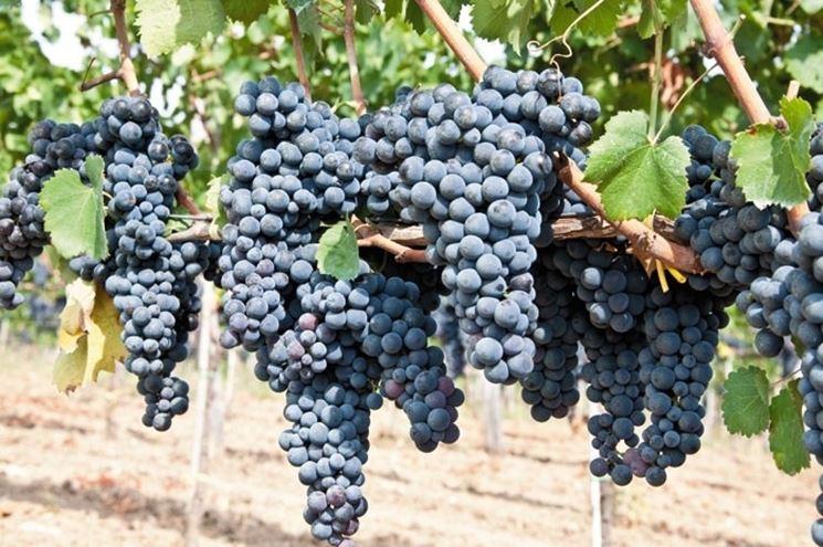 Il Vino proibito